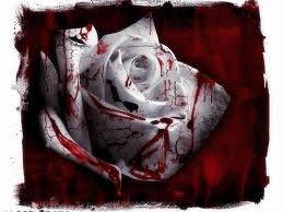 A Bloody White Rose